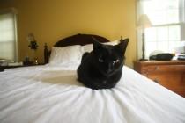 Bat in Bed