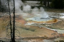 Norris Geyser Basin, May 2005