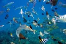 Oahu - Snorkeling