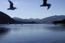 Lake Wanaka, 2000