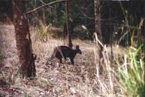Kangaroo 2000